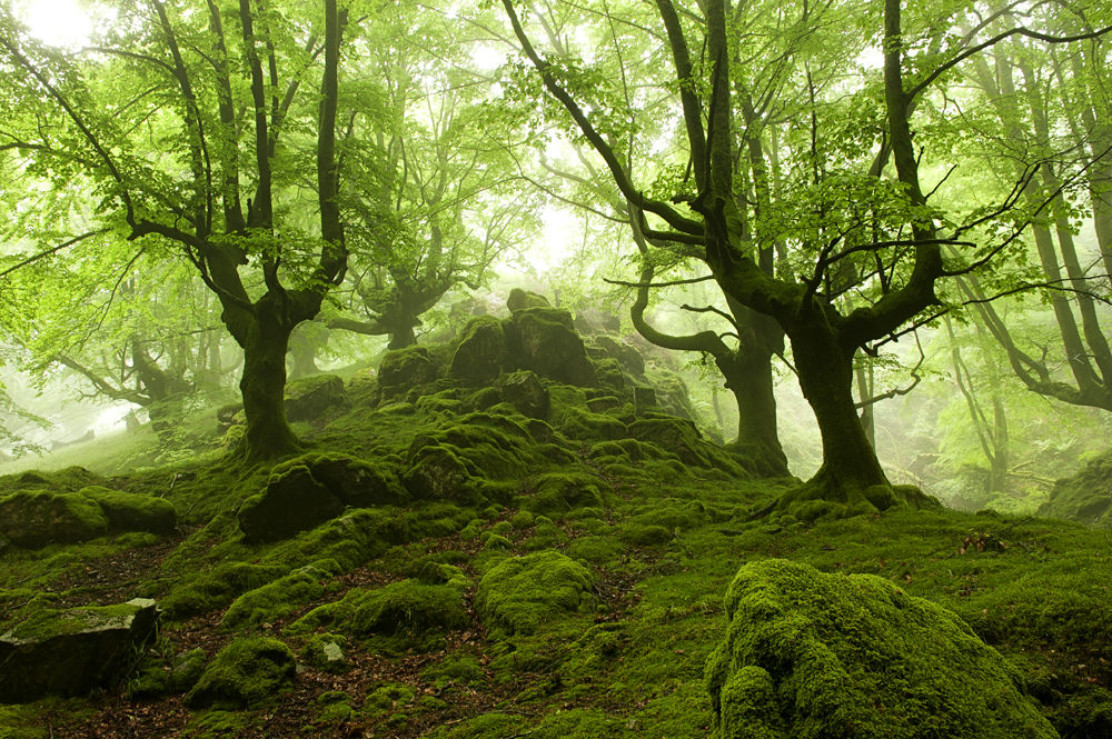 Bosque de hayas | Fotografías de Oskar Zapirain