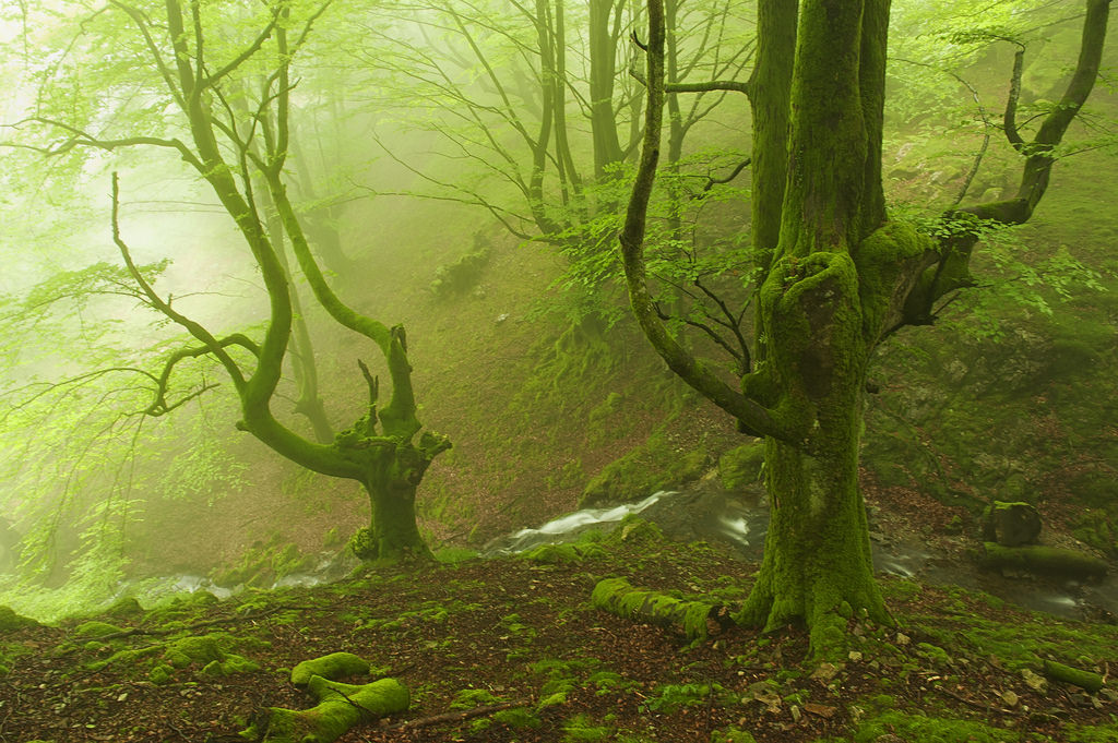 bosque-de-hayas-oskar-zapirain-3