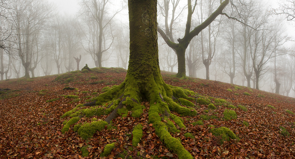 bosque-de-hayas-oskar-zapirain-5