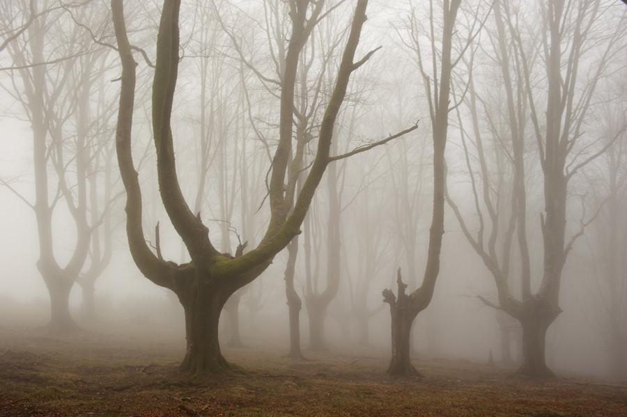 bosque-de-hayas-oskar-zapirain-6