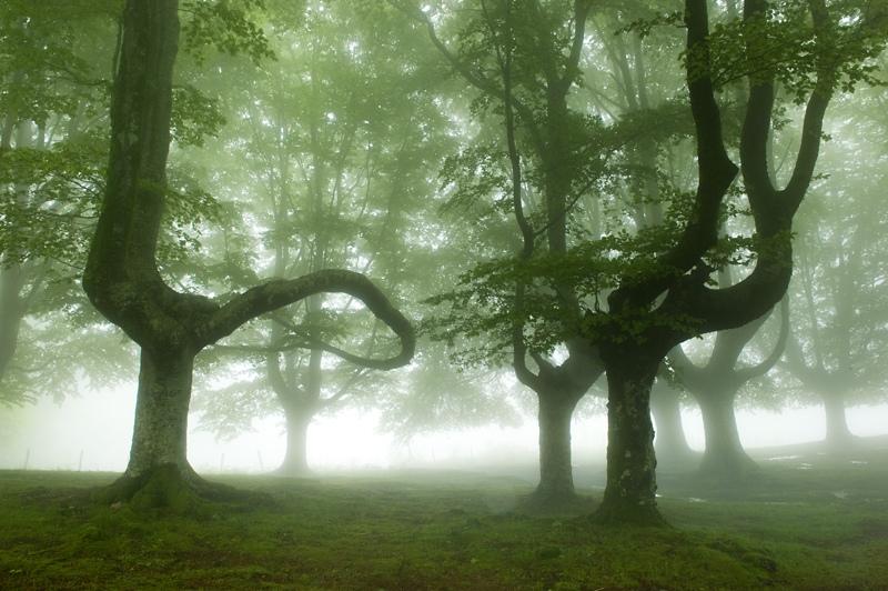 bosque-de-hayas-oskar-zapirain-7
