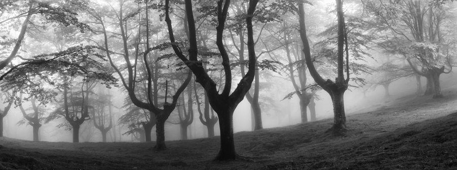 bosque-de-hayas-oskar-zapirain-8