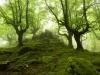bosque-de-hayas-oskar-zapirain-1