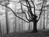 bosque-de-hayas-oskar-zapirain-10