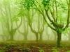 bosque-de-hayas-oskar-zapirain-2