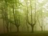 bosque-de-hayas-oskar-zapirain-4