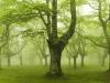 bosque-de-hayas-oskar-zapirain-9