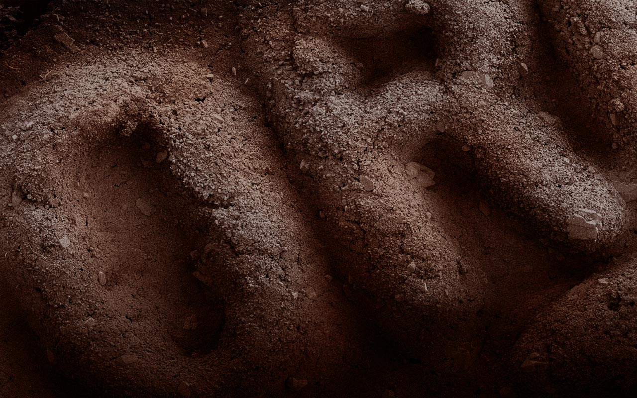 alpert-galleta-oreo
