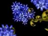 bluelilacmed