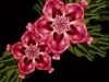 cecelia-webber-jungle-pink