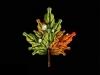 cecelia-webber-maple