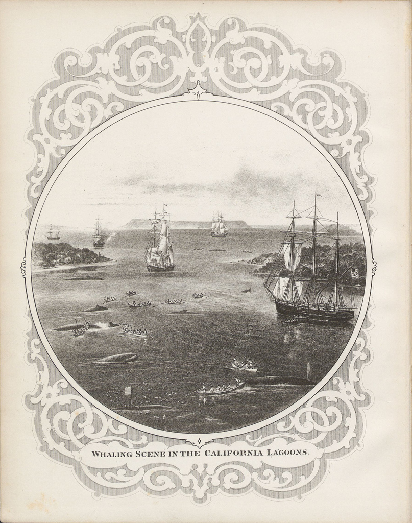 Whaling-Scene-in-the-California-Lagoons