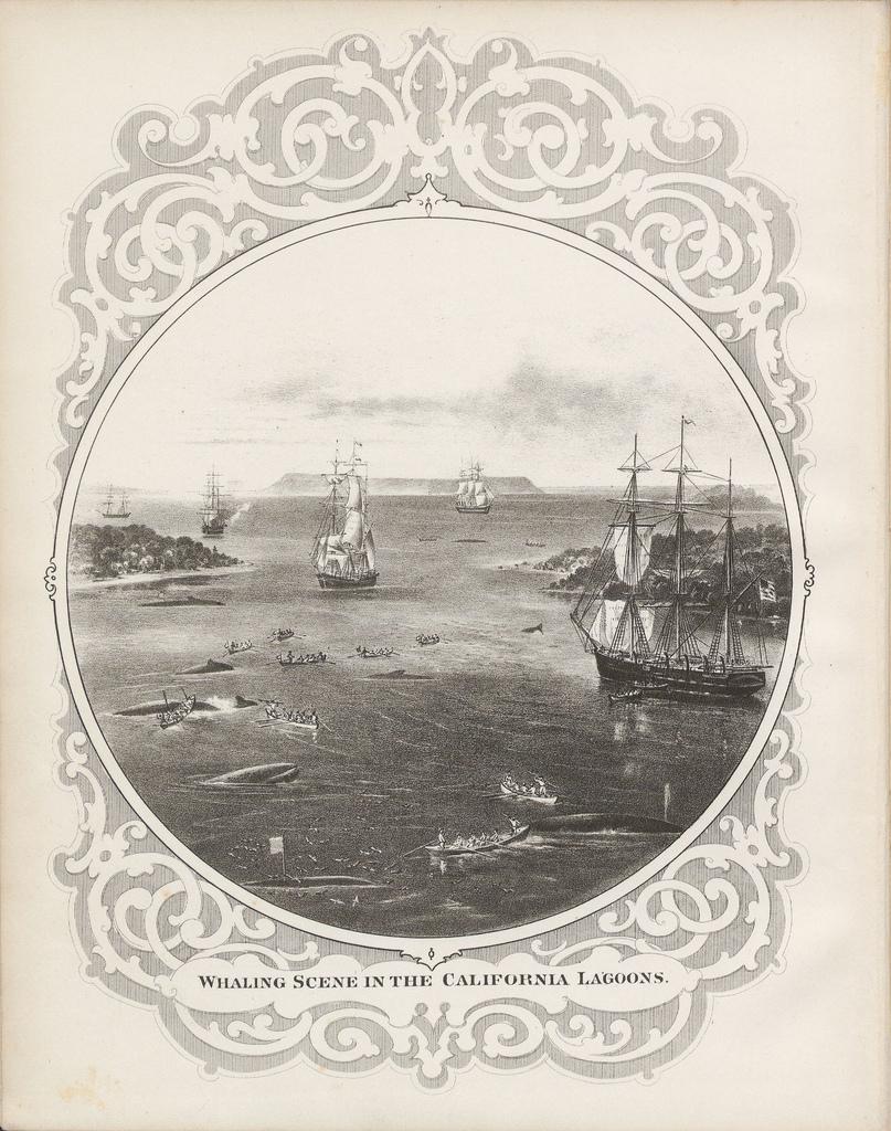 Whaling-Scene-in-the-California-Lagoons