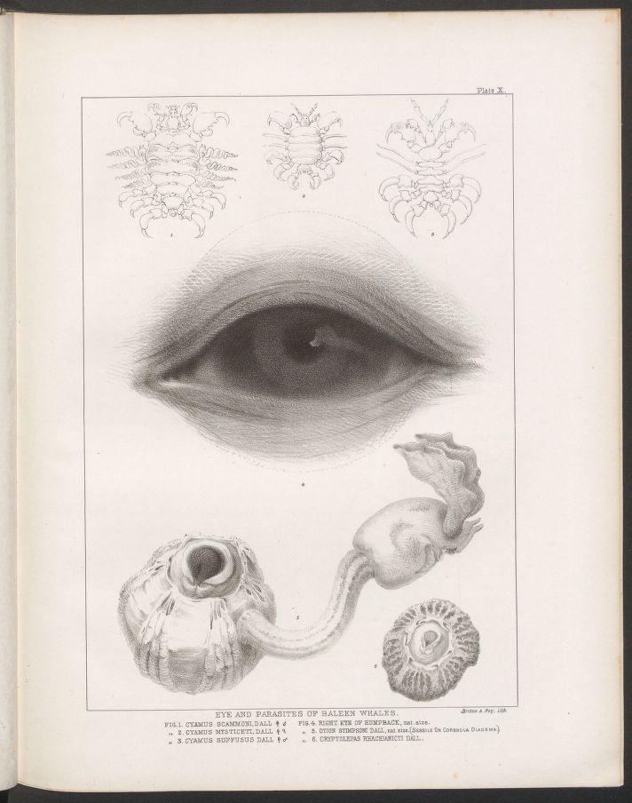 el-ojo-de-una-ballena