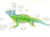 basilisk-lizard