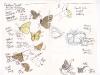 field-notes-butterflies