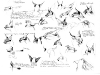 field-notes-lynx