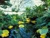 garden_garfield_2