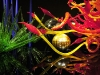 nica-krauer-chihuly-06_b