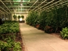 de-kas-restaurant-inside-greenhouse-10