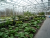 de-kas-restaurant-inside-greenhouse-12