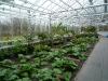 de-kas-restaurant-inside-greenhouse-12