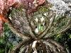1-2_visiondivision_the_patient_gardener_interior_perspective_72dpi