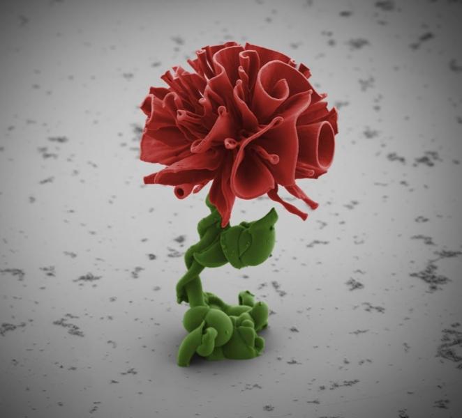 microscopic-crystal-flower-1