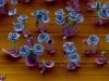 microscopic-crystal-flower-10