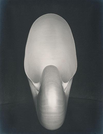 edward-weston-nautilus-1927