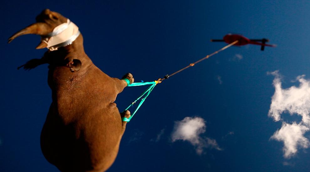 rinoceronte-negro-volando