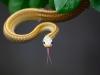 serpiente en Zisiqiao China