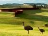 richard-serra-te-tuhiranqi-contour-gibbs-farm-2