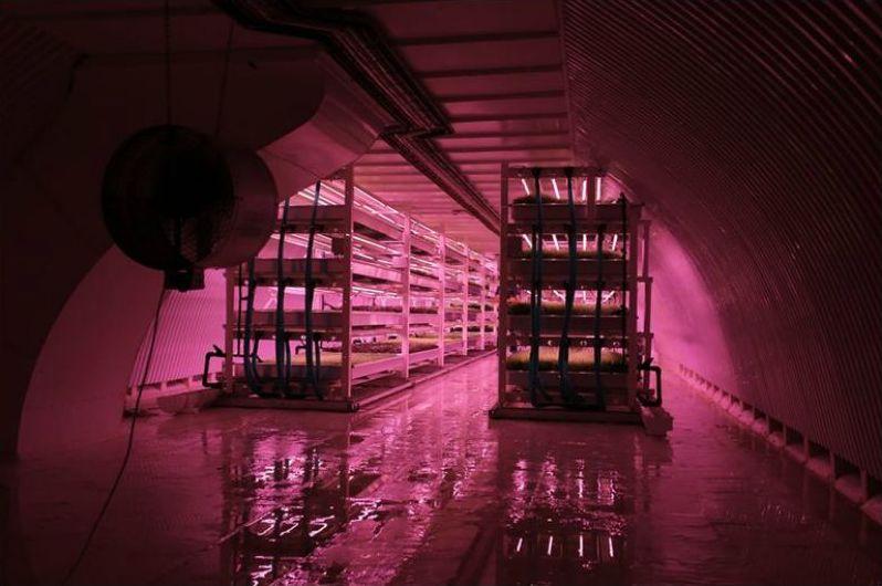 huerto-subterraneo-hidroponico-londres-bandejas-cultivo-2