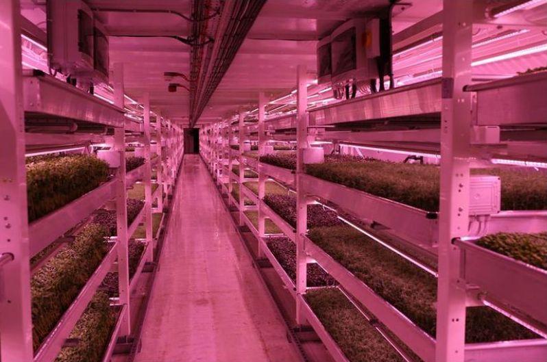 huerto-subterraneo-hidroponico-londres-bandejas-cultivo
