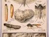 Ephestia-kuehniella-Polilla-de-la-harina