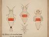 Heliothrips-rubrocinctus