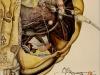 locusta-migratoria-Langosta-migratoria-africana)