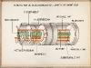 diagrama-Lumbricus-lombriz