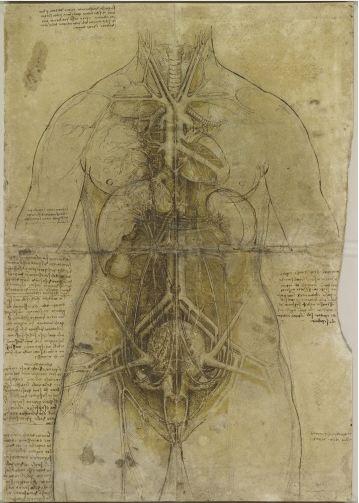 Leonardo-el-sistema-cardiovascular-y-de-los-organos-principales-de-una-mujer-1509-10
