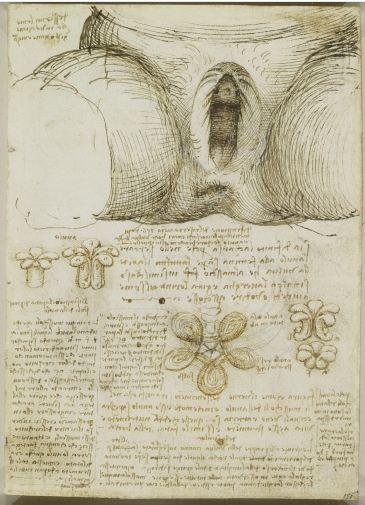 Leonardo da Vinci: Anatomist / Exposición en la Queen´s Gallery | Aryse