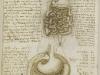 el-tracto-gastrointestinal-y-la-vejiga-1508