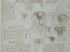 el-ventriculo-derecho-y-la-valvula-tricuspide-1512-13