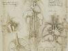 estudios-sobre-el-corazon-pulmones-higado-bazo-1508