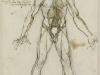 leonardo-organos-principales-y-vasos-sanguineos