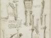 los-huesos-del-brazo-y-la-pierna-1510-11