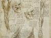 los-musculos-de-la-cara-y-el-brazo-y-los-nervios-y-las-venas-de-la-mano-1510-11
