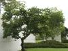 tree_museum_14