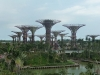 gardens-by-the-bay-supertrees-3