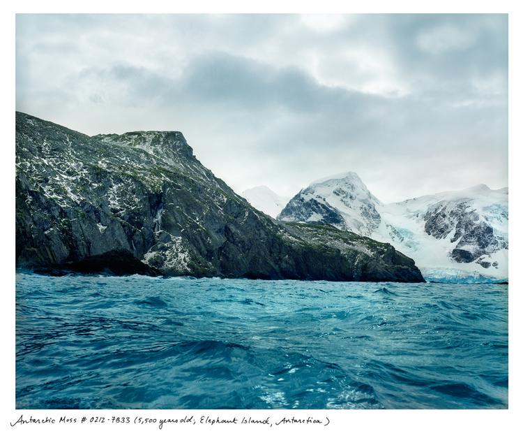 Sussman_AntarcticMoss